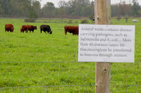 Greetings from the Pasture by Nava Atlas: Animal Waste