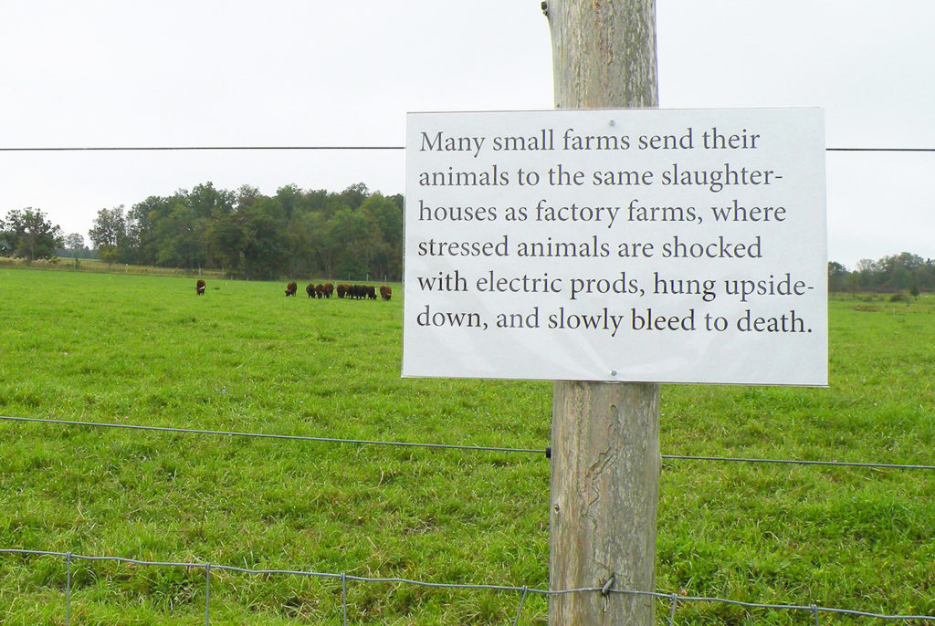 Greetings from the Pasture: Animals to slaughterhouses by Nava Atlas