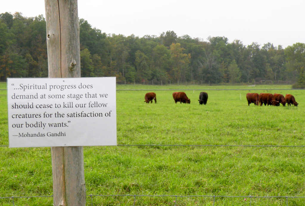Greetings from the Pasture: Spritual Progress by Nava Atlas