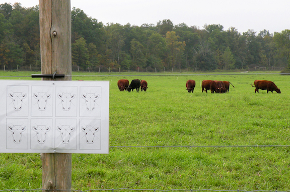 Greetings from the Pasture: Target Heads by Nava Atlas